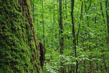 木と共に歩んで七十余年